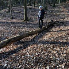 leg i skoven